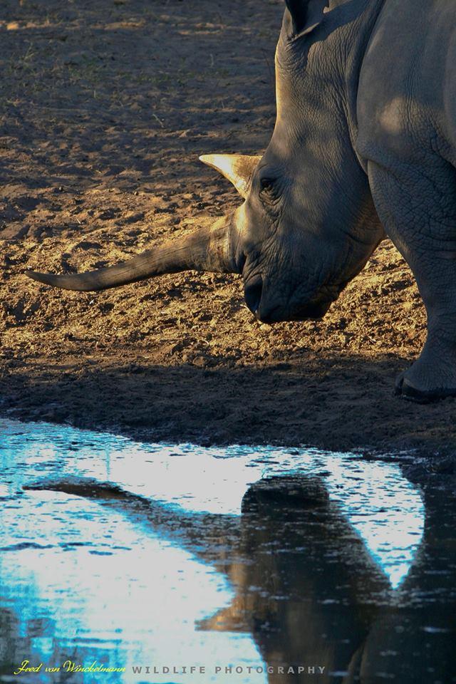 Rhino Water